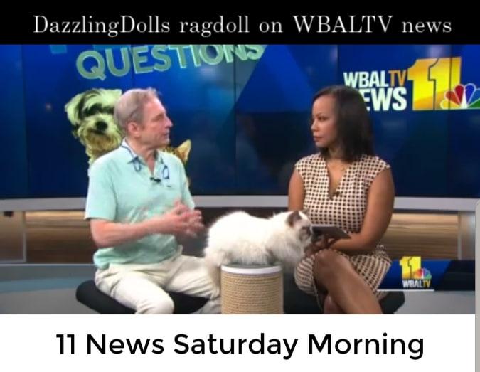 Dazzling Ragdolls Homepage